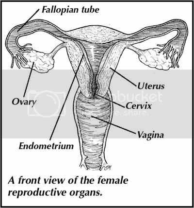 Ovary